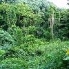 az-amazonas-lemeszarlasa