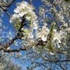 tavasz_a_gyumolcsosben